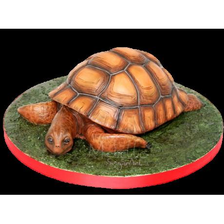 turtle cake 4 6