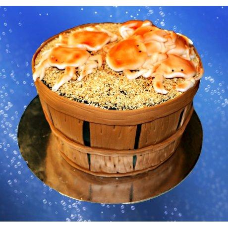 Bucket Crabs Cakes